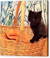 Sassy Cat Acrylic Print