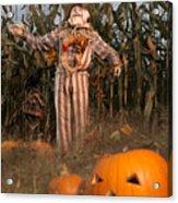 Scarecrow In A Corn Field Acrylic Print