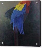 Scarlet Macaw   Three Acrylic Print