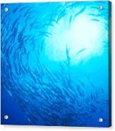 School Of Bigeye Jacks Acrylic Print