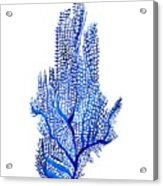 Sea Fan Acrylic Print