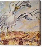 Seagull Salute Acrylic Print
