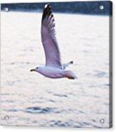 Seagulls Flying Acrylic Print