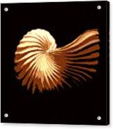 Seashell 1 Acrylic Print