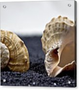 Seashells On Black Sand Acrylic Print