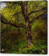 Secluded Tree Acrylic Print