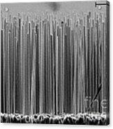 Semiconductor Nanowires, Sem Acrylic Print