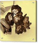 Sepia Flowers Acrylic Print