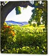 Shady Vineyard Acrylic Print