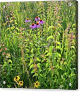 Shelley Kelly Prairie Wildflowers Acrylic Print