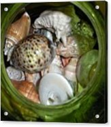 Shells Under Glass Acrylic Print