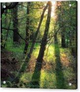 Shining Through Acrylic Print