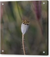 Signed By Nature 5 Acrylic Print