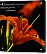 Single Tiger Lily Poster Acrylic Print