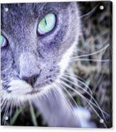 Skitty Cat Acrylic Print