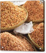 Small Asian Dried Shrimp In Kep Market Cambodia Acrylic Print