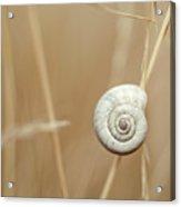Snail On Autum Grass Blade Acrylic Print