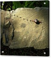 Snail Trail Acrylic Print