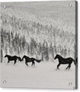 Snow Angels Acrylic Print