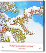 Snow-covered Conifer Acrylic Print