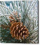 Snowy Pine Cones Acrylic Print