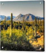 Sonoran Desert Acrylic Print