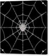 Spider No.2 Acrylic Print