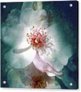 Spring Flowering Acrylic Print