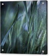 Spring Grass Emerging Acrylic Print