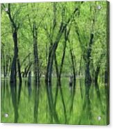 Spring Green Reflections  Acrylic Print by Lori Frisch