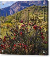 Spring In The Desert  Acrylic Print