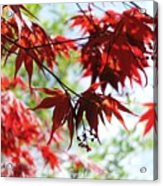Spring Xxv Acrylic Print