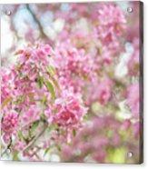 Spring Lightness Acrylic Print