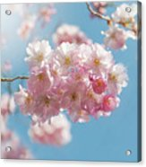 Spring Pinks Acrylic Print