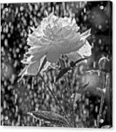 Spring Rain - 365-13 Acrylic Print