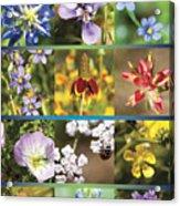 Spring Wildflowers II Acrylic Print