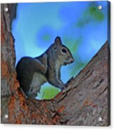 1- Squirrel Acrylic Print