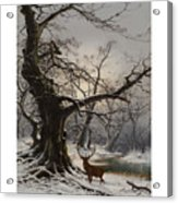 Stag In A Snow Covered Wooded Landscape Acrylic Print