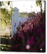 Cape Farm Courtyard  Acrylic Print