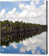 Stick Marsh In Fellsmere Florida Acrylic Print