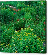 Stream And Alpine Flowers, Ouray Acrylic Print