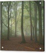 Stunning Colorful Moody Vibrant Autumn Fall Foggy Forest Landsca Acrylic Print