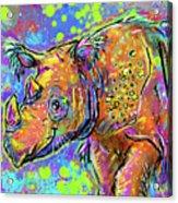 Sumatran Rhino Acrylic Print