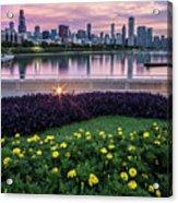summer flowers and Chicago skyline Acrylic Print