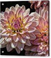 Sun And Flowers Acrylic Print