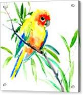 Sun Parakeet Acrylic Print