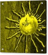 Sun Tool Acrylic Print