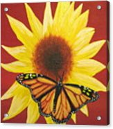 Sunflower Monarch Acrylic Print