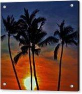 Sunlit Palms Acrylic Print