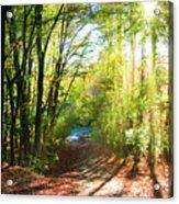 Sunny Autumn Path Acrylic Print